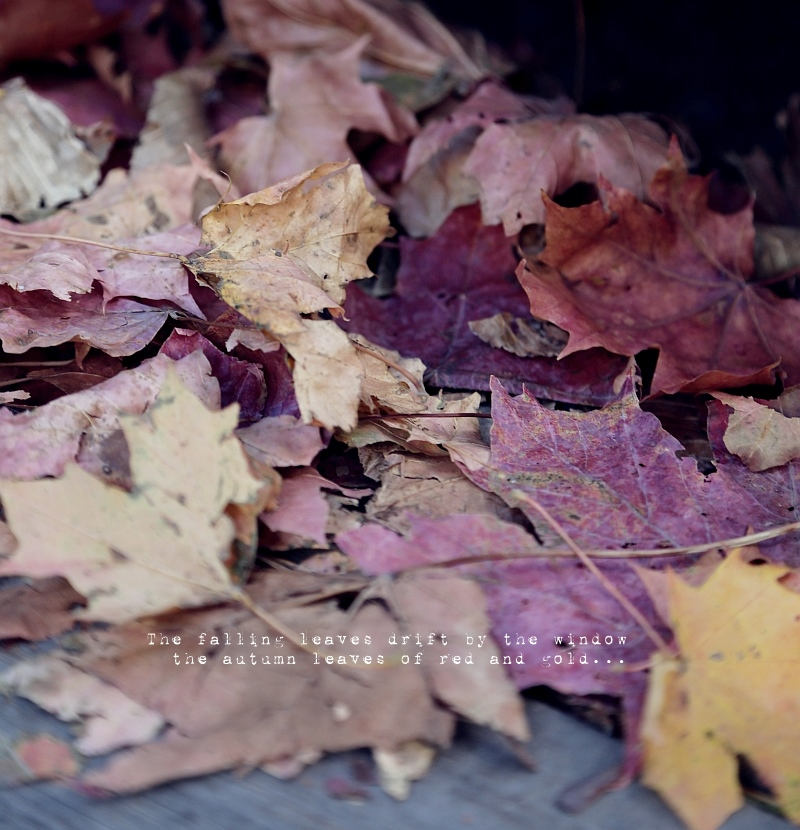 autumn-leaves8